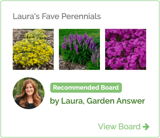 Recommended Idea Board Lauras Fave Perennials for 2020